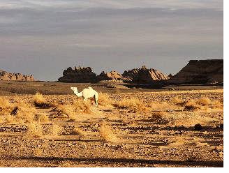 libyen kamel